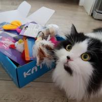 Kattbox